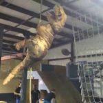Jurajski Parkour: Amerykański ninja Saurus