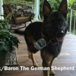 "What's on, when Baron, the German Shepherd says: ""It was a long day"""
