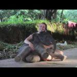 Baby Elephant will unbedingt kuscheln