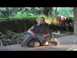 Elefante bebê quer abraçar necessariamente
