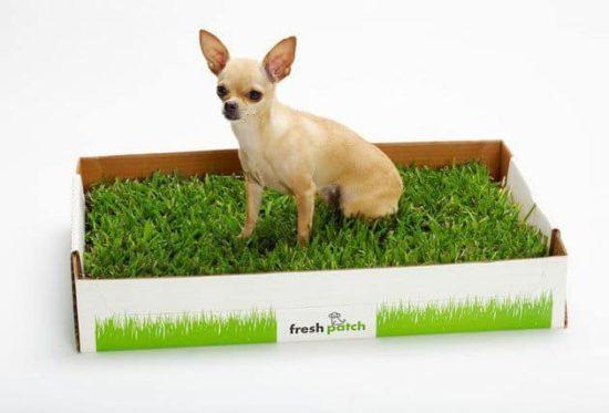 Frisk Patch: Die grüne Wiese für Bellos Geschäfte