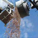 Specht hamstert 150 Kilo ekollon som lager