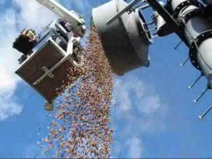Specht hamstert 150 Kilo bellotas como acciones
