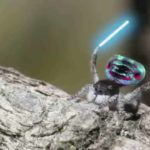 Spider with lightsabers
