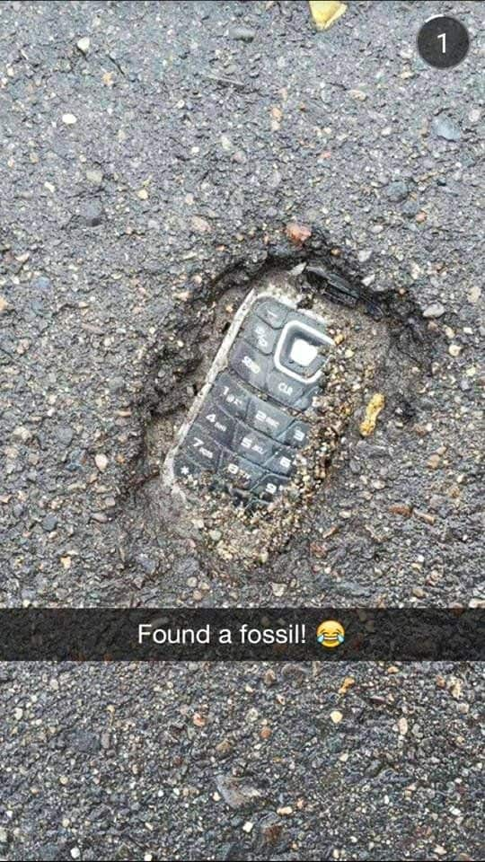 Fossil found