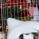 Miten varmistaa joulukuusi kissat