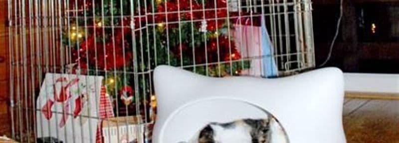 wie man den weihnachtsbaum katzensicher macht dravens. Black Bedroom Furniture Sets. Home Design Ideas