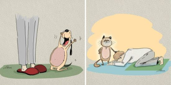 Cats vs Dogs: 6 Différences illustrées par Bird Born
