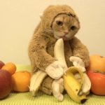 Cat in Monkey Suit
