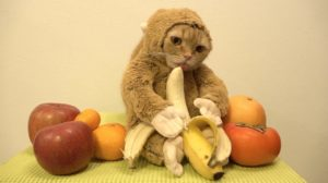 Katze im Affenkostüm