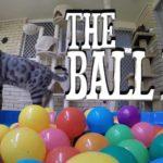 Gatto nel pozzo palla
