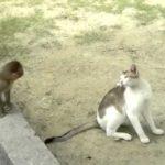 Mono del bebé que toma el pelo de gato