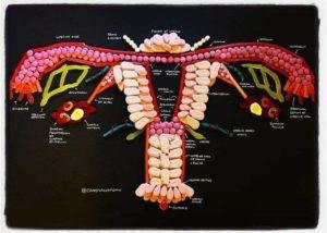 Anatomi af slik