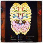 Anatomi av søtsaker