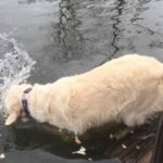 Clever dog used bread to catch fish