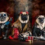 Hellpugs: Wenn Möpse Hellboy treffen