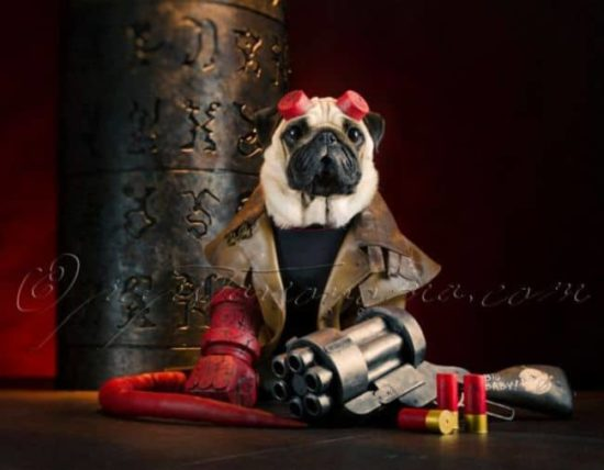 Hellpugs: When Pugs Hellboy meet