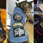 Katter i punk rock- og Metal-vest