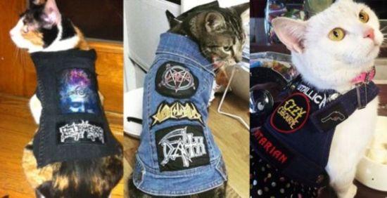 Katzen in Punk-Rock- und Metal-Westen