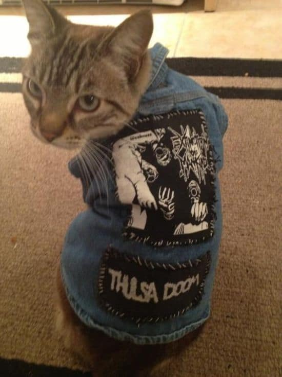 Katten in punk rock- en Metal-west