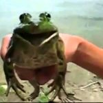 Even play melodies on a toad