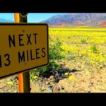 Super Bloom: If the desert blooms – Regen im Death Valley