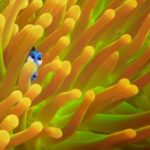 Finding Dory – New Trailer