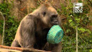 Gorillas auf Ostereiersuche
