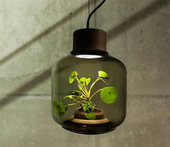 Mygdal: Die autonome Pflanzenlampe