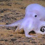 Casper, der gespenstische Octopus