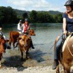 Kuhtrekking: Auf dem Rücken einer Kuh durch die Schweizer Alpen reiten