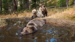 Die Bärenbadewanne im Yellowstone Nationalpark
