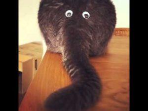 Katzenpo eller Plush Elephant?