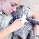 Kuschel-Koala