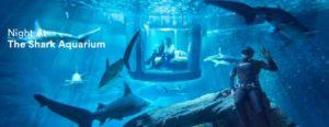 Paris: Istället Eiffeltornet, även sova med hajar
