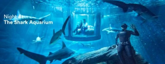 Paris: Instead the Eiffel Tower, even sleep with sharks