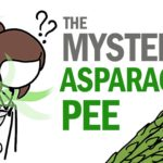 Why our pee smells like asparagus so