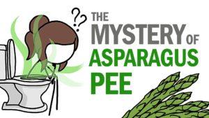 Waarom onze plas ruikt asperges zo