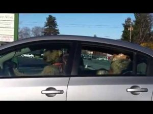 Two impatient dog in the car
