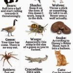 How to ward off deadly attacks by animals