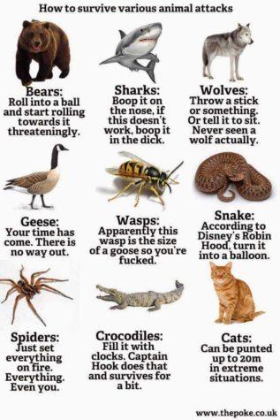Wie man tödlichen Angriffe von Tieren abwehrt