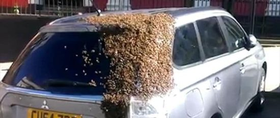 Bee Swarm followed two days a car