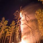 Burning: Timelapse of a burning down tree