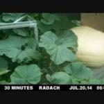 Kijken naar een pompoen in time-lapse, terwijl er steeds