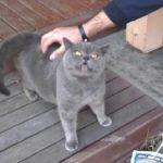kilen katt