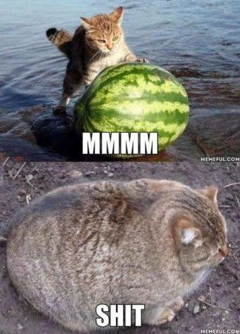 Lecker Melone
