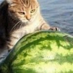 pyszne melona