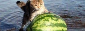deilig melon