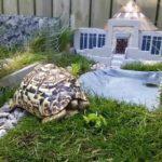 Thumbnail Jurassic Park per una tartaruga