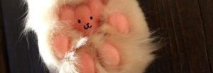 Teddybär Katzenpfoten